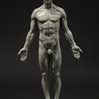 3D Total Anatomy Reference Casts – Review – On Animation