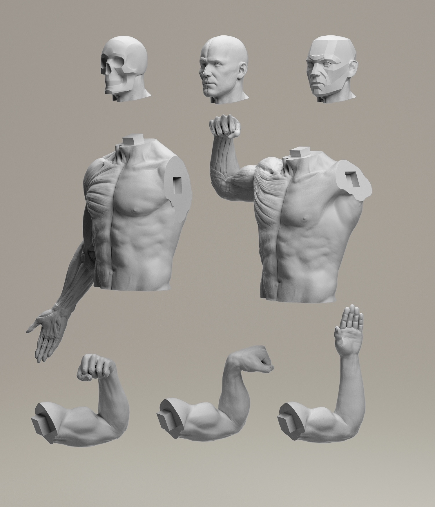 3dtotal Anatomy Reference Extended Collection On Animation