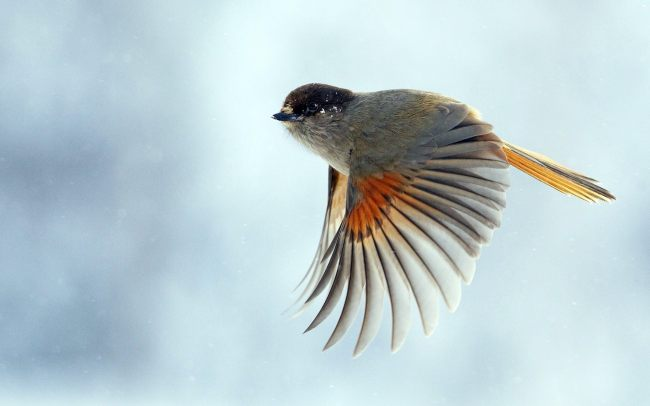 cute-little-bird-flying-hd-wallpaper